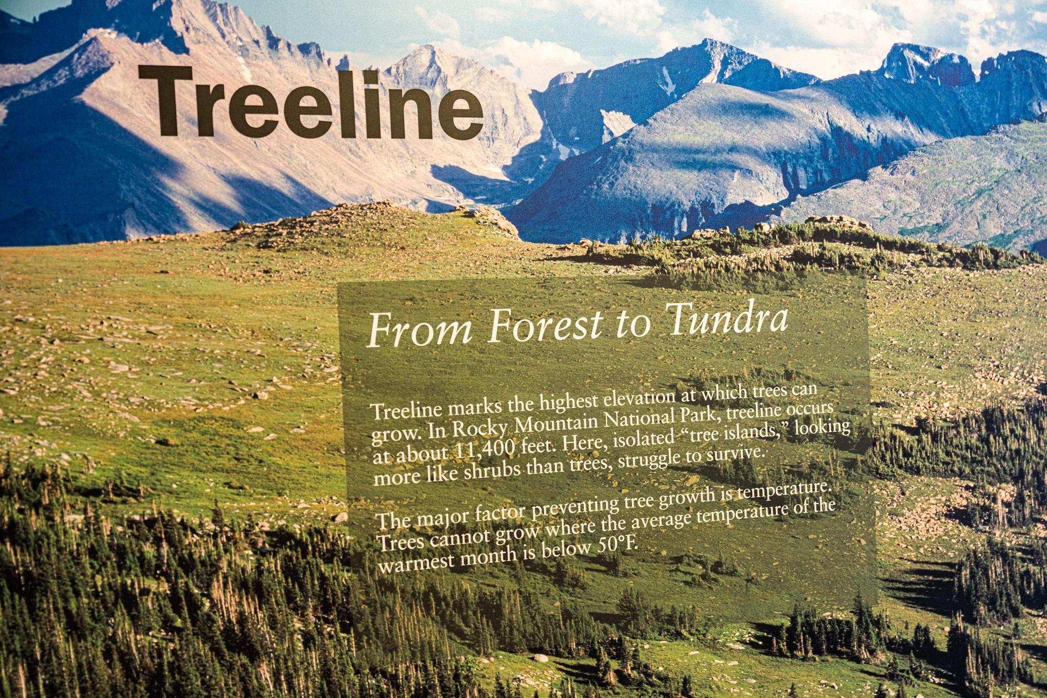 Rocky Mountain Treeline