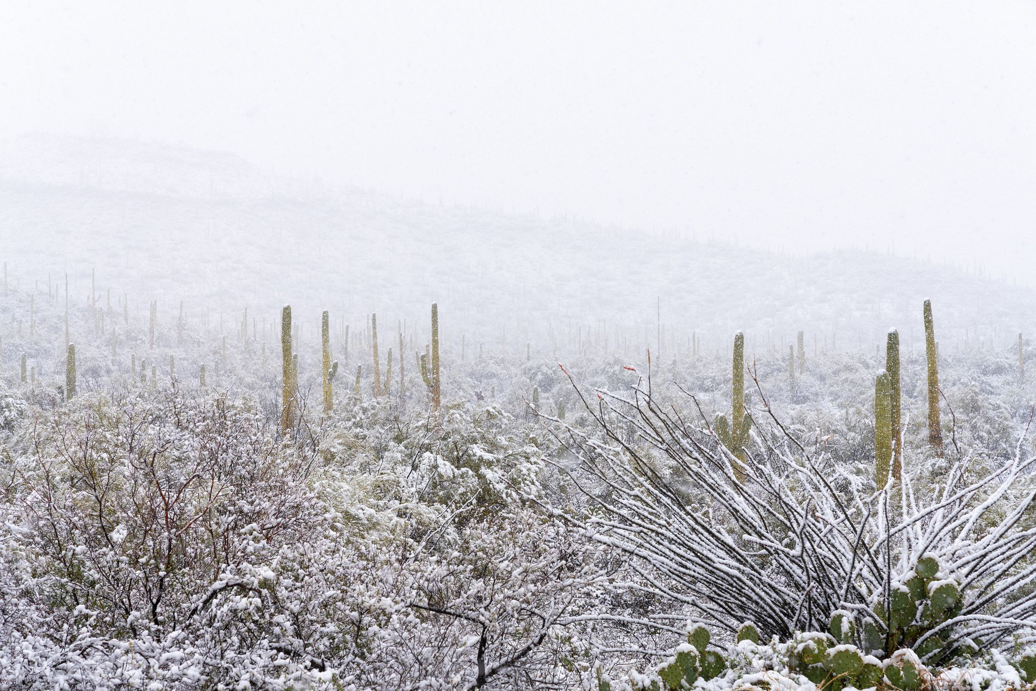 Saguaro National Park in Snow