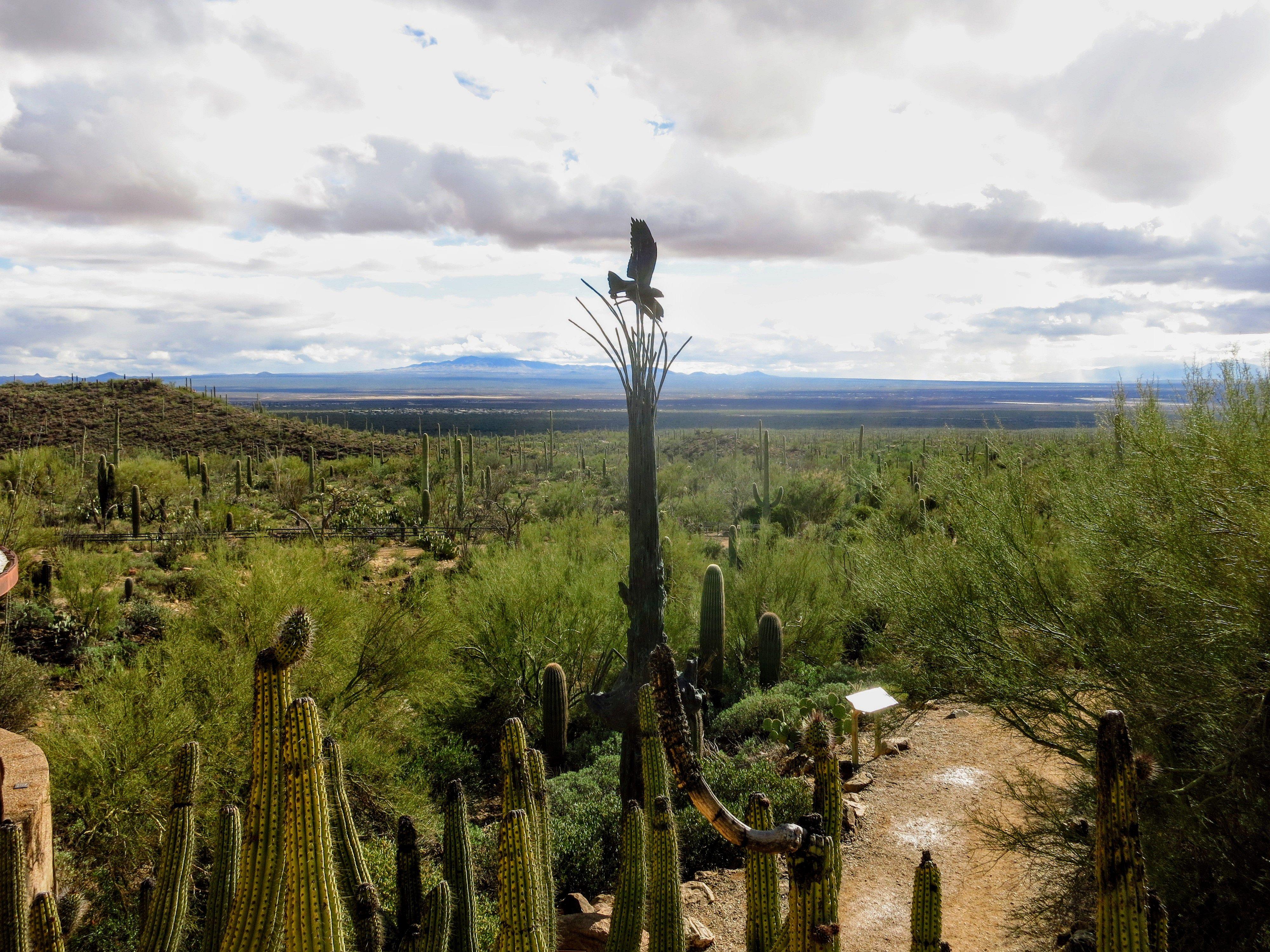 Flying Bird at Sonora Arizona Desert Museum