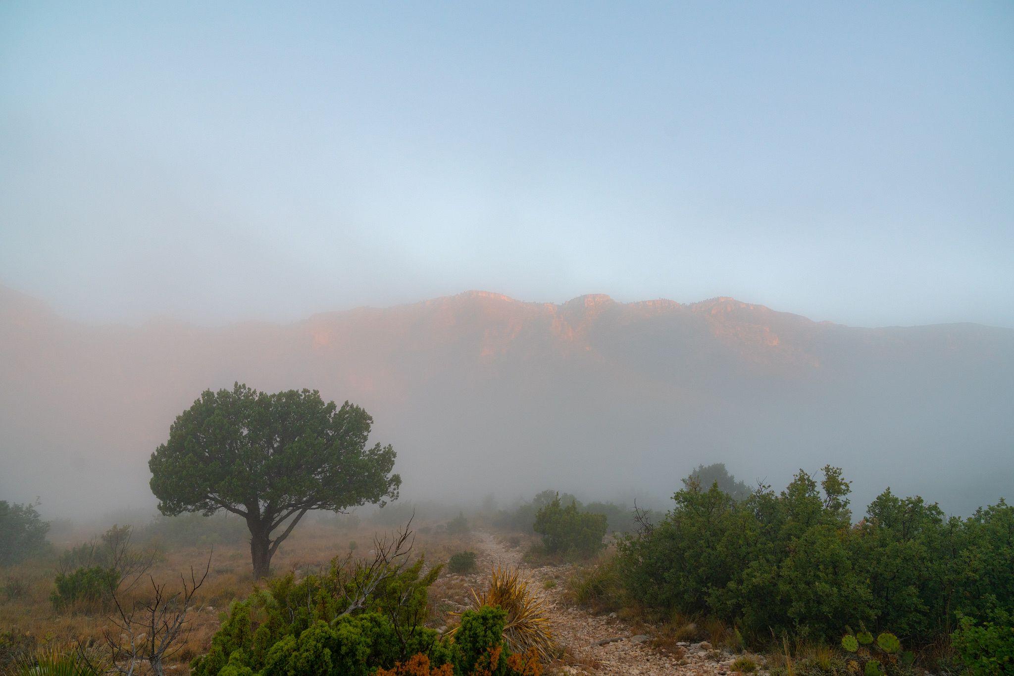 Fog on Smith Spring Trail