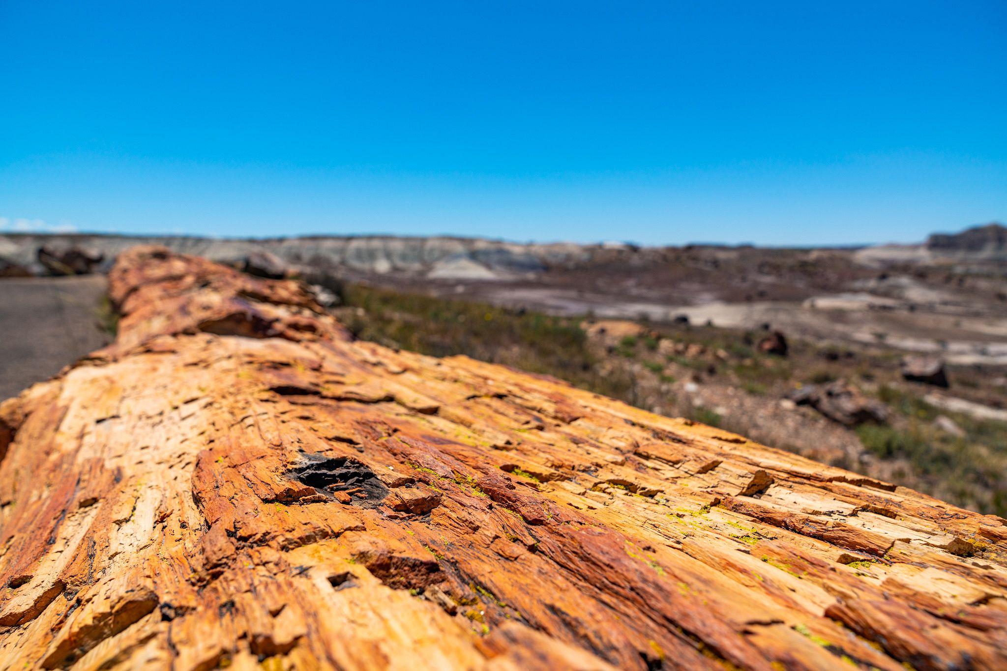 Petrified Wood Bark