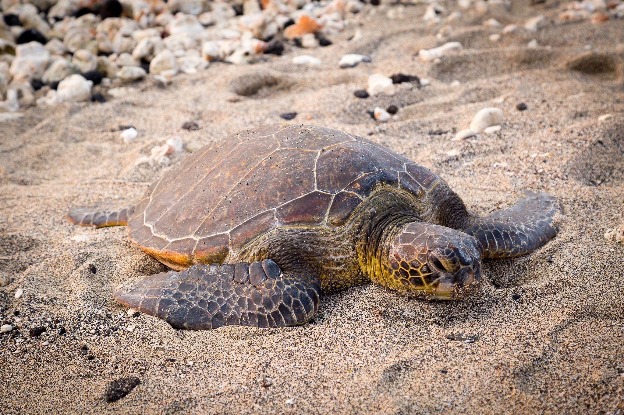 Turtle on sand.