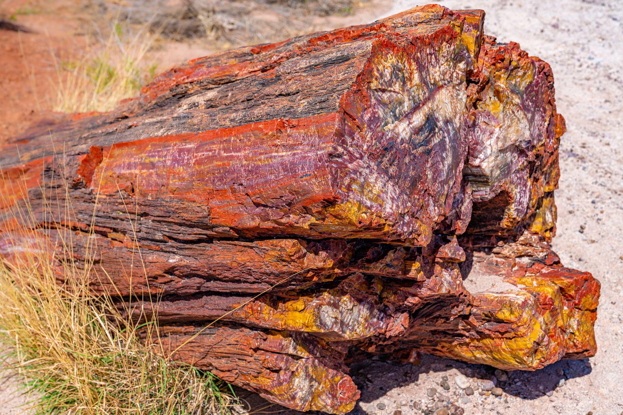 Petrified Wood Colors