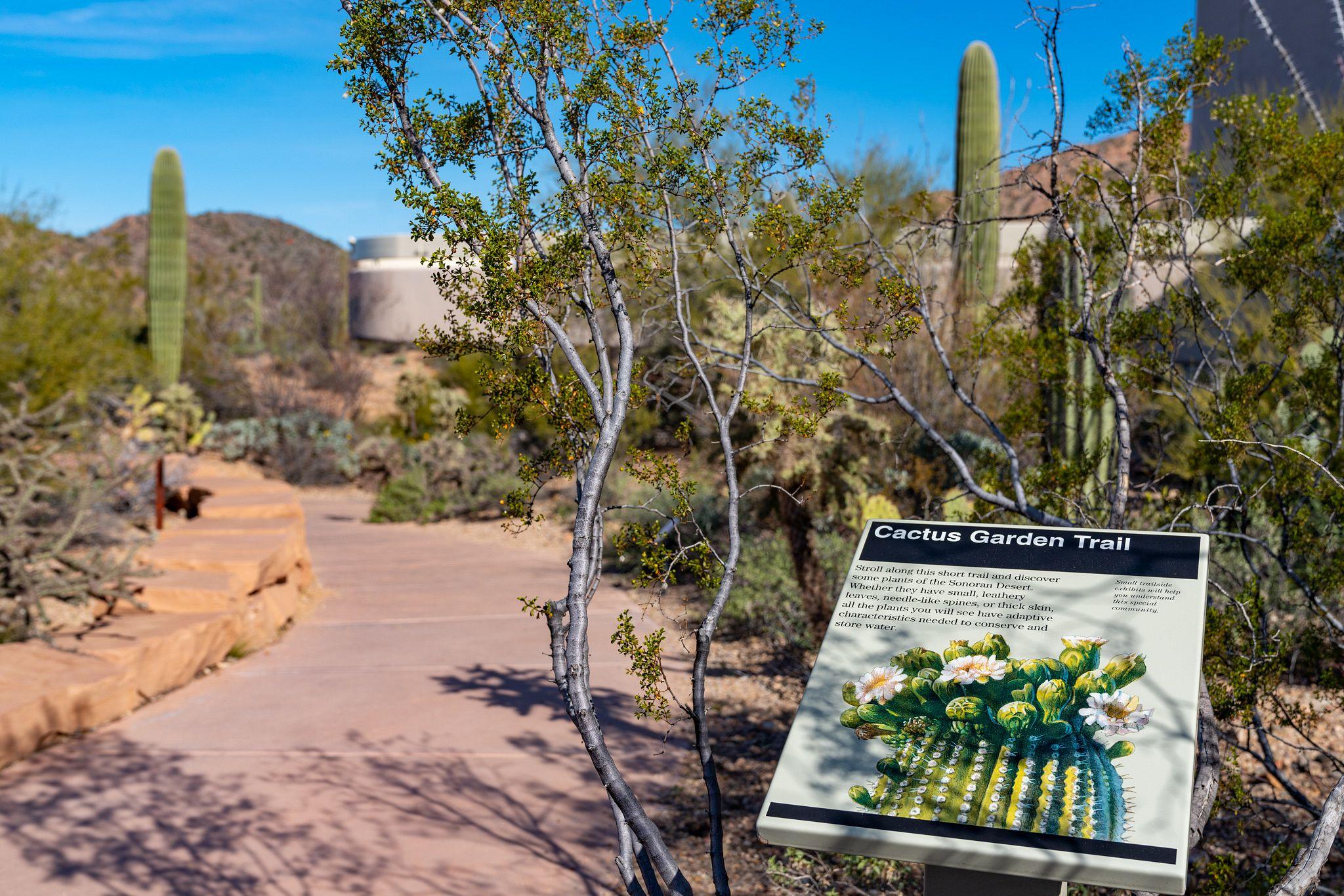 Cactus Garden Trail