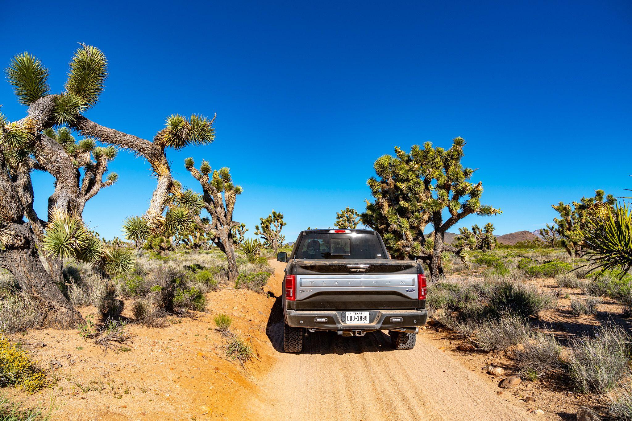 Joshua Trees alongisde Mojave Road